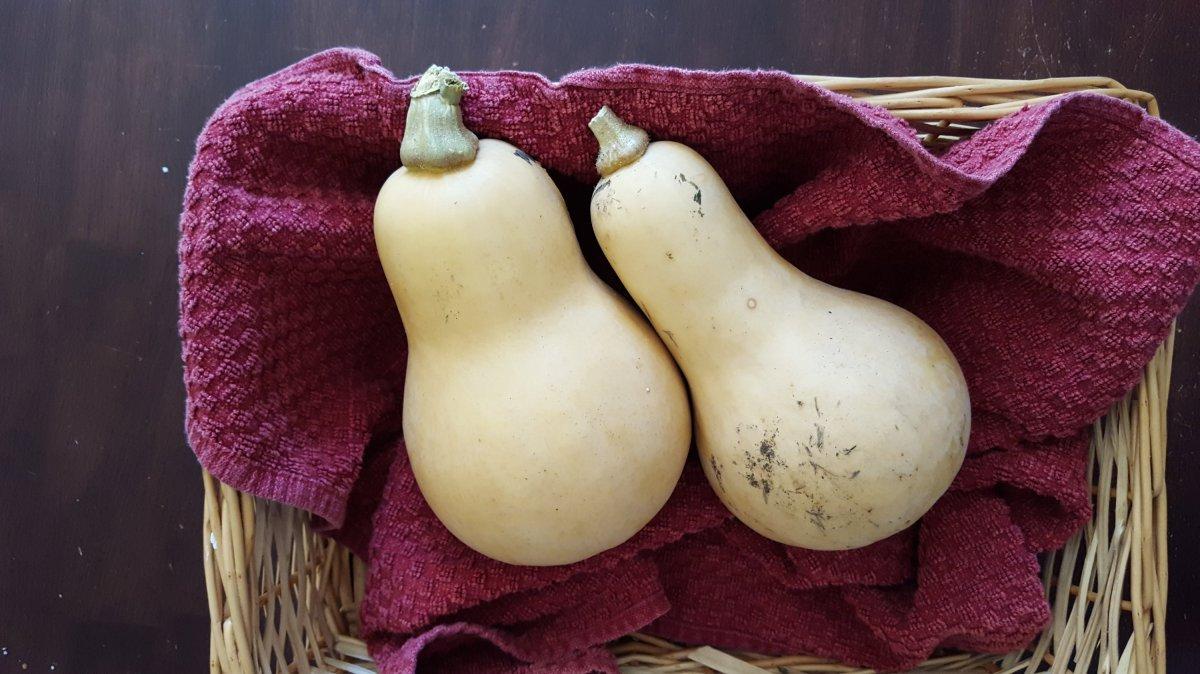Fresh butternut squash